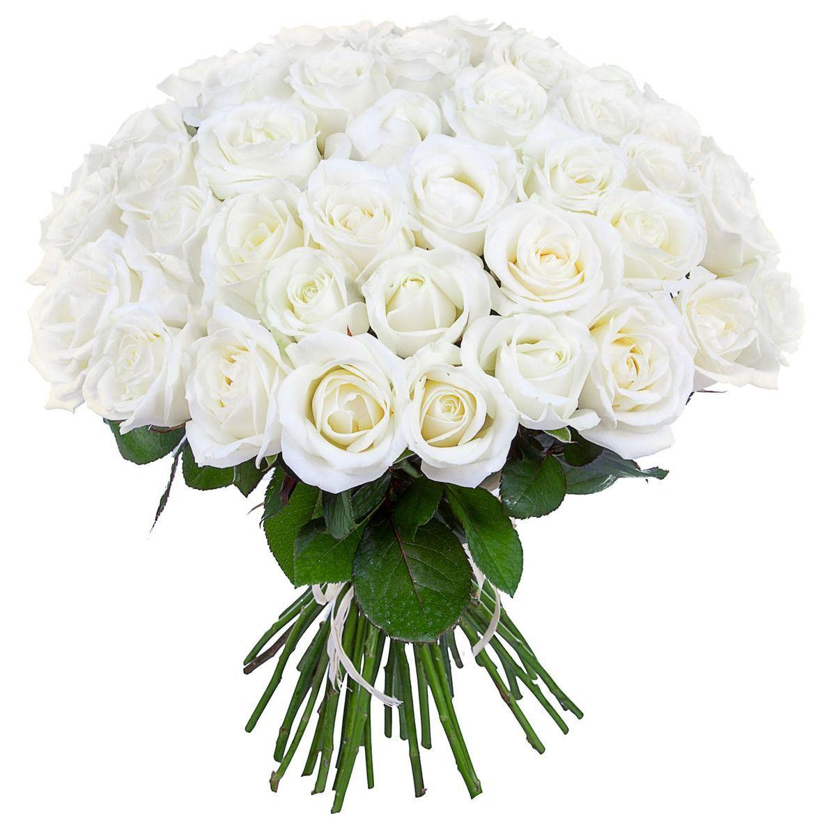 Картинки белых роз букет, днем рождения